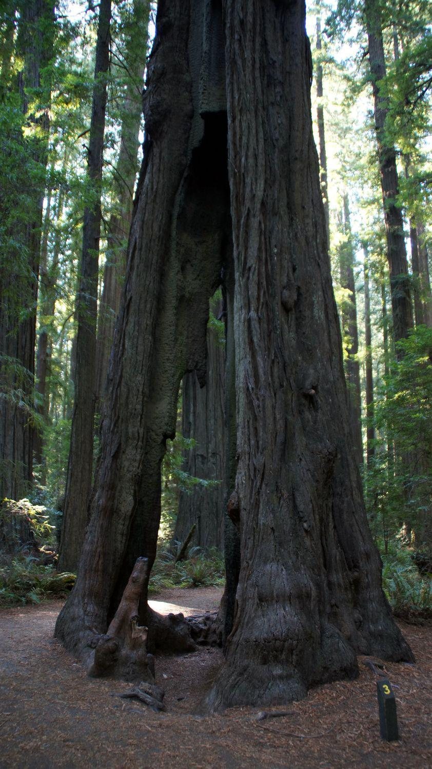 redwood nationalpark 04