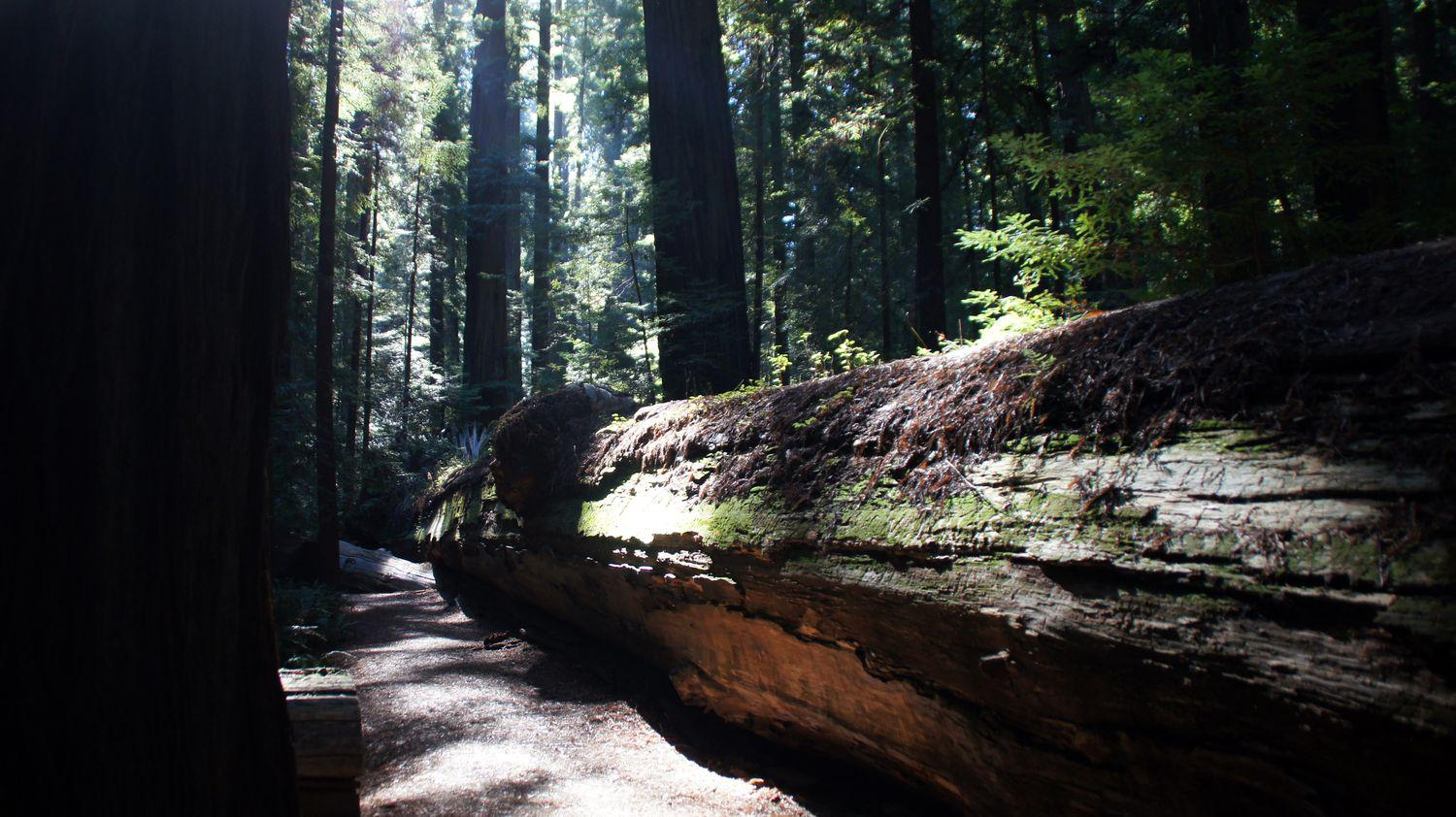 redwood nationalpark 07