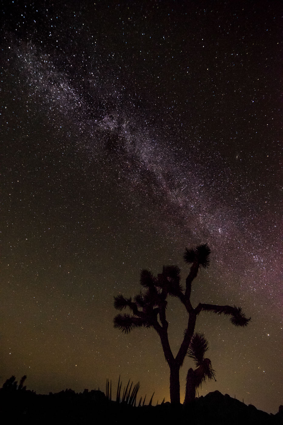 joshua tree np 2